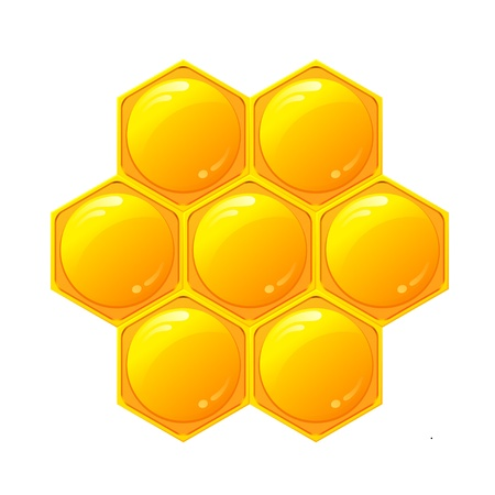 bee hive: Honeycomb