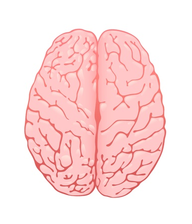 frontal views: pink brain a top view
