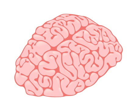 frontal view: pink brain vertical view Illustration