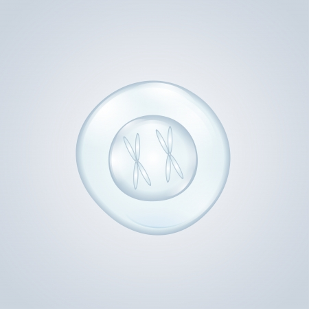 fertilized egg: fertilized egg