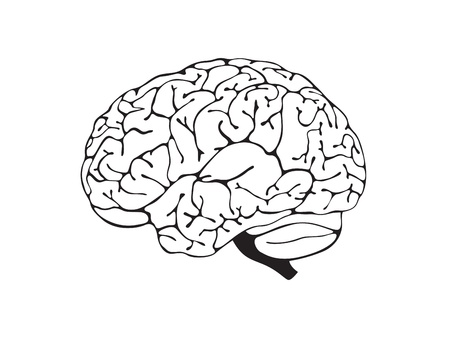 brain is a black and white side view Vector