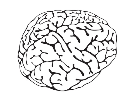 fissures: brain is a black and white view of three-quarters Illustration