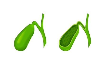 gastrointestinal: ves�cula biliar