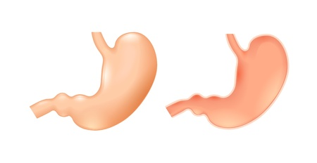 gut: Human stomach on white background