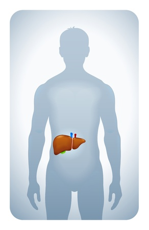bowel cancer: liver highlighted on the silhouette of a man
