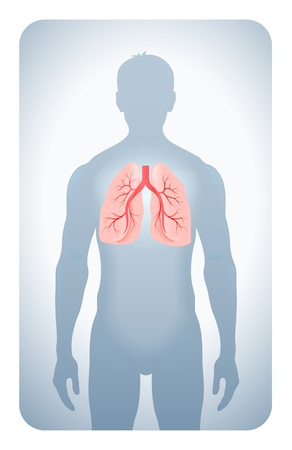 airways: lungs highlighted on the silhouette of a man