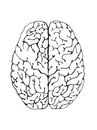 brain stem: The brain is a black and white view from above
