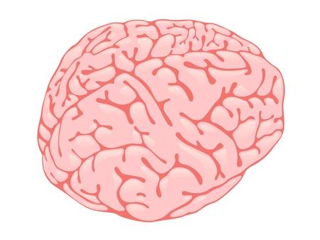 Volumetric pink brain form in three-quarters Stock Vector - 13920382
