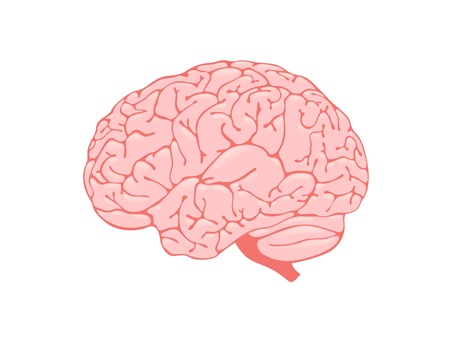 Volumetric pink brain is a side view Stock Vector - 13920400