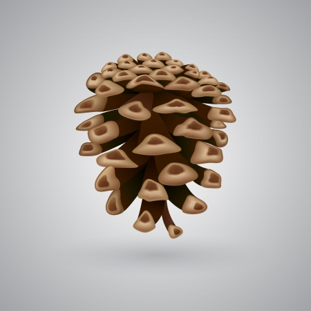 illustration of a single pine cone Stock Vector - 16925817