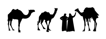 among: Eastern people stand among the camels on the white background Illustration