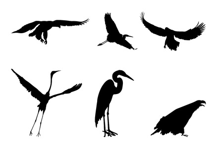 goshawk: Silhouettes of the eagle and the stork on white background Illustration