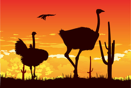 steppe: Wild ostriches among the cacti on the hot sunset background Illustration