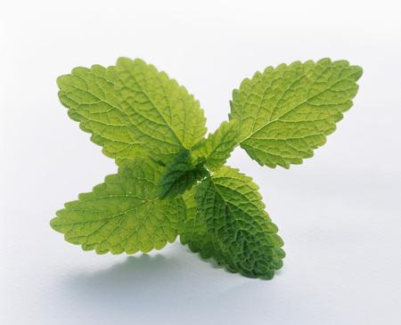 mint leaves: Mint Leaves LANG_EVOIMAGES