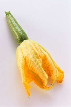 Zucchini Blossom with Zucchini LANG_EVOIMAGES
