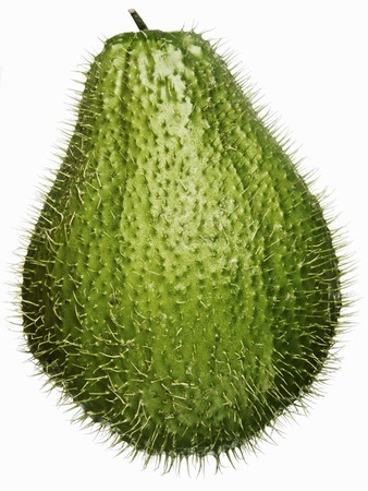 chayote: A prickly chayote