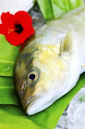 tunafish: Big Island Kanpachi LANG_EVOIMAGES