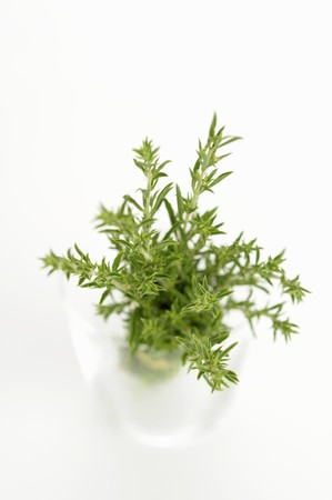 water thyme: Fresh thyme sprigs in a glass of water