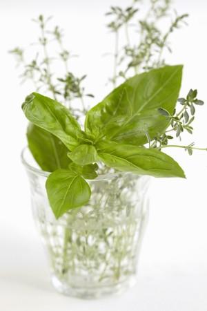 water thyme: Albahaca y el tomillo en un vaso de agua