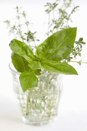 water thyme: Basil and thyme in a glass of water LANG_EVOIMAGES