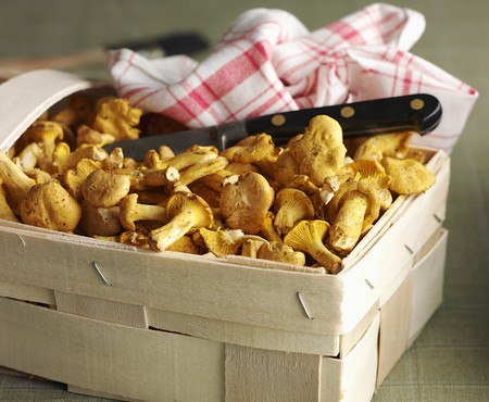 dish cloth: Fresh chanterelle mushrooms in a wooden basket with a knife and a dish cloth