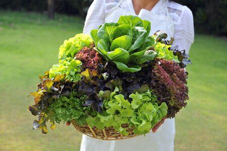 origins: A woman holding basket of fresh lettuce