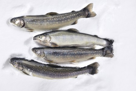 brook trout: Fresh trout and char