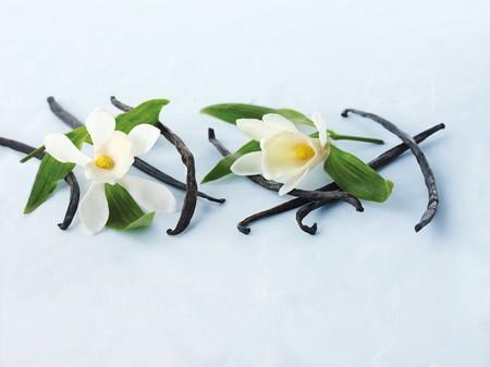 bean family: Vanilla pods and vanilla flowers