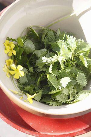 stinging  nettle: Fresh stinging nettle leaves in a bowl LANG_EVOIMAGES