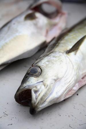 coalfish: Fresh coalfish