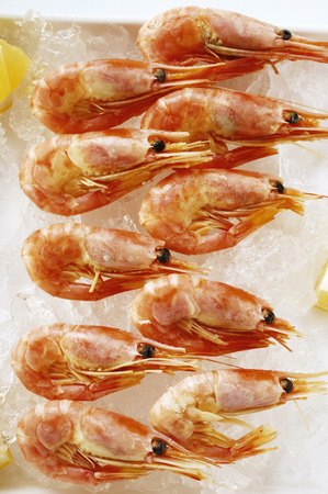 crushed ice: Shrimps on crushed ice LANG_EVOIMAGES