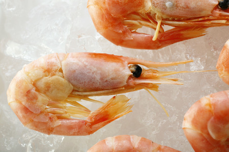 glace pil�e: Crevettes sur de la glace pil�e (close-up)