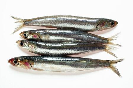 sardines: Fresh sardines