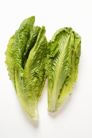 cos: Romaine lettuce