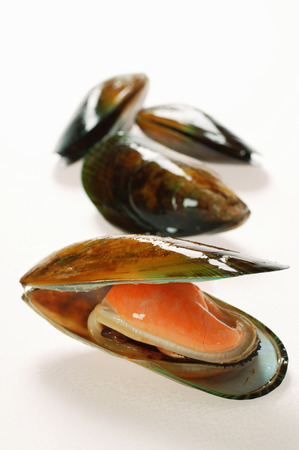 mollusc: New Zealand mussels, one opened