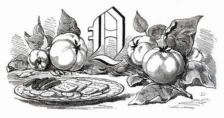 quinces: Still life with letter Q and quinces (illustration)