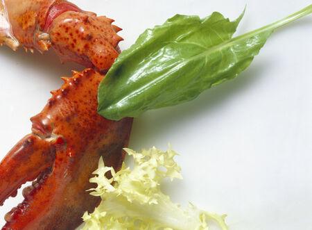 endive: Lobster; Arugala & Curly Endive