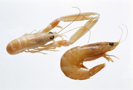 scampi: Shrimps and scampi