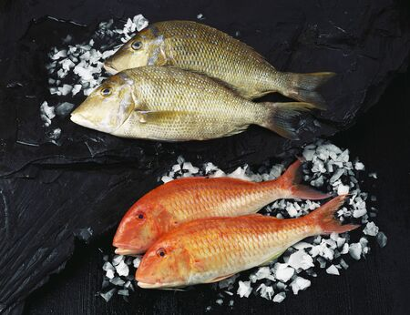 gilthead bream: Two red snapper and two gilthead sea bream LANG_EVOIMAGES
