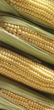 zea mays: Four corn cobs LANG_EVOIMAGES