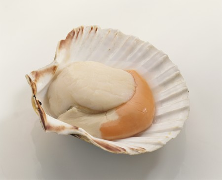 coquille: A scallop in its shell LANG_EVOIMAGES