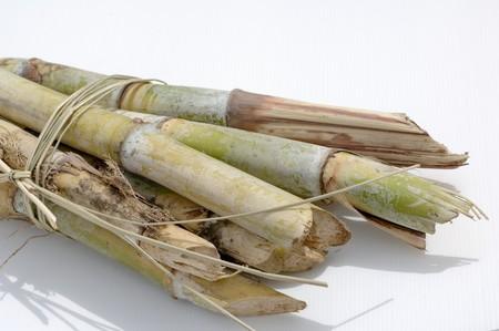 bundling: A bundle of sugar cane