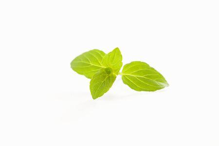 mint leaves: Fresh mint leaves