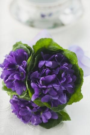 violets: Bunch of violets LANG_EVOIMAGES