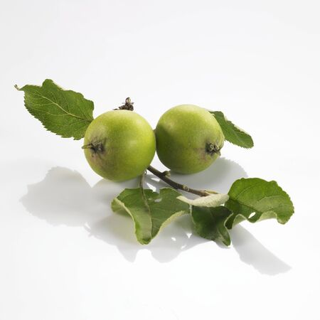in twos: Two green apples on small branch LANG_EVOIMAGES