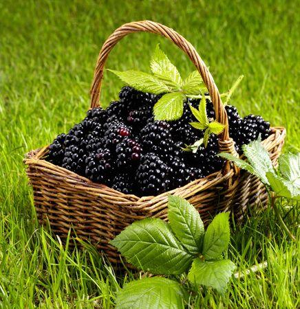 brambleberries: Fresh blackberries in a basket