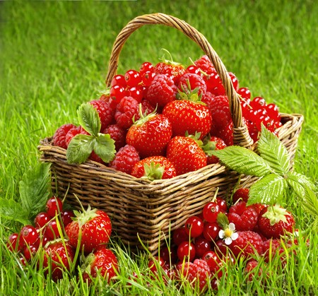 willow fruit basket: Fresh berries in a basket LANG_EVOIMAGES