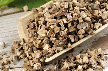 quercus robur: Common oak, chopped bark