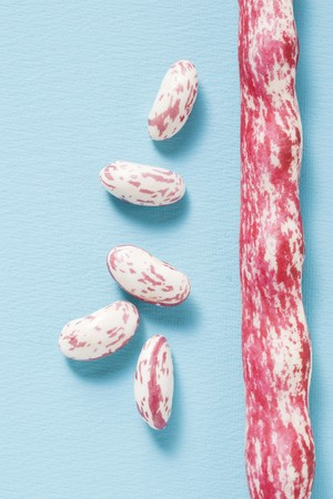 borlotti beans: Borlotti beans, shelled and unshelled