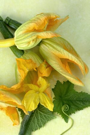cocozelle: Courgette flowers LANG_EVOIMAGES